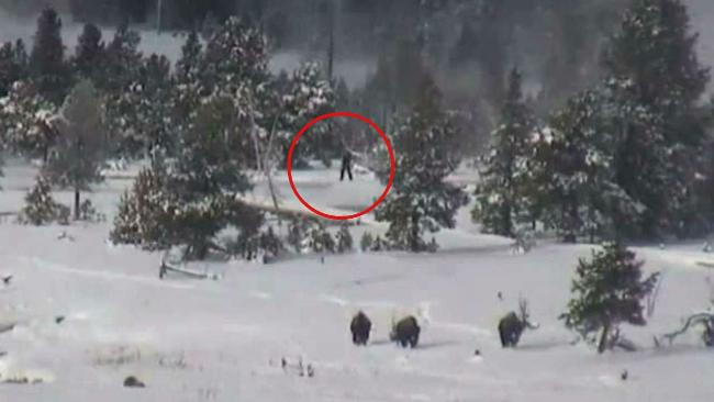 bigfoot_familie_yellowstone
